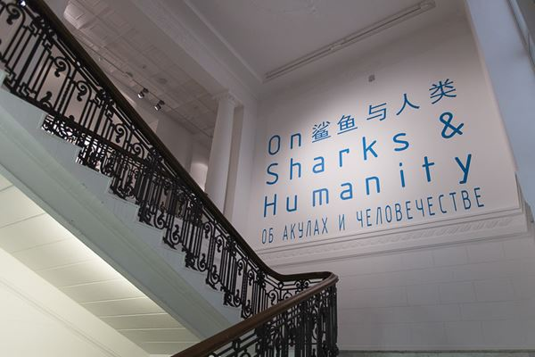 On Sharks & Humanity